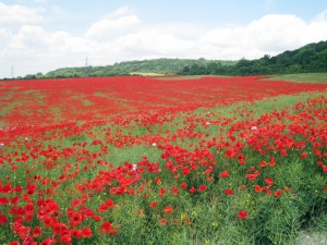 Poppy Fields were an uplifting highlight!